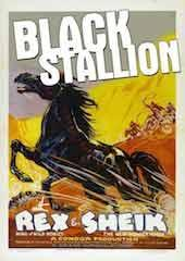 Black Stallion (aka King of the Sierras)