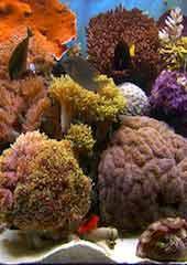 Living Aquarium 01