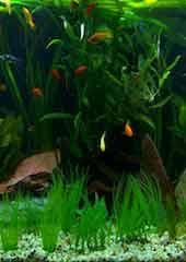 Living Aquarium 02