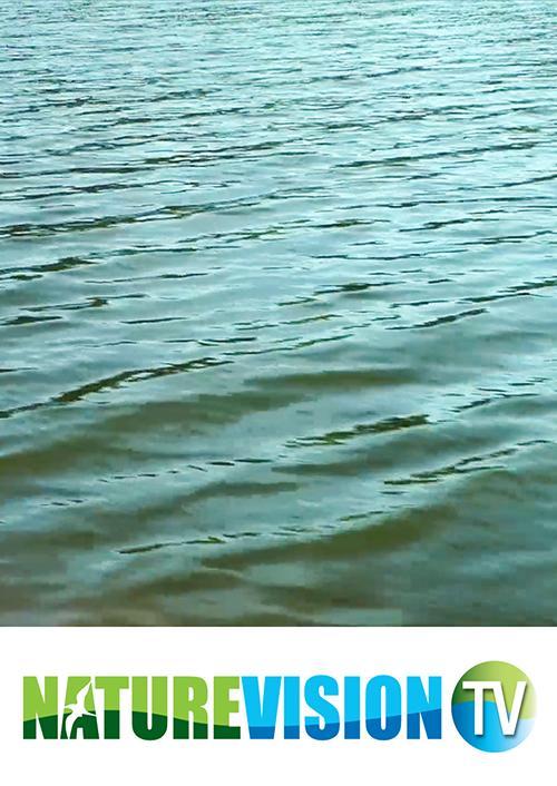 A Serene Lake