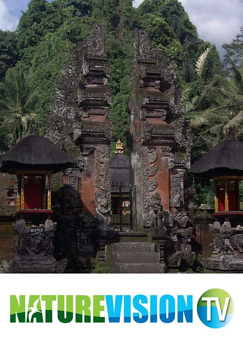 The Wonders of Bali